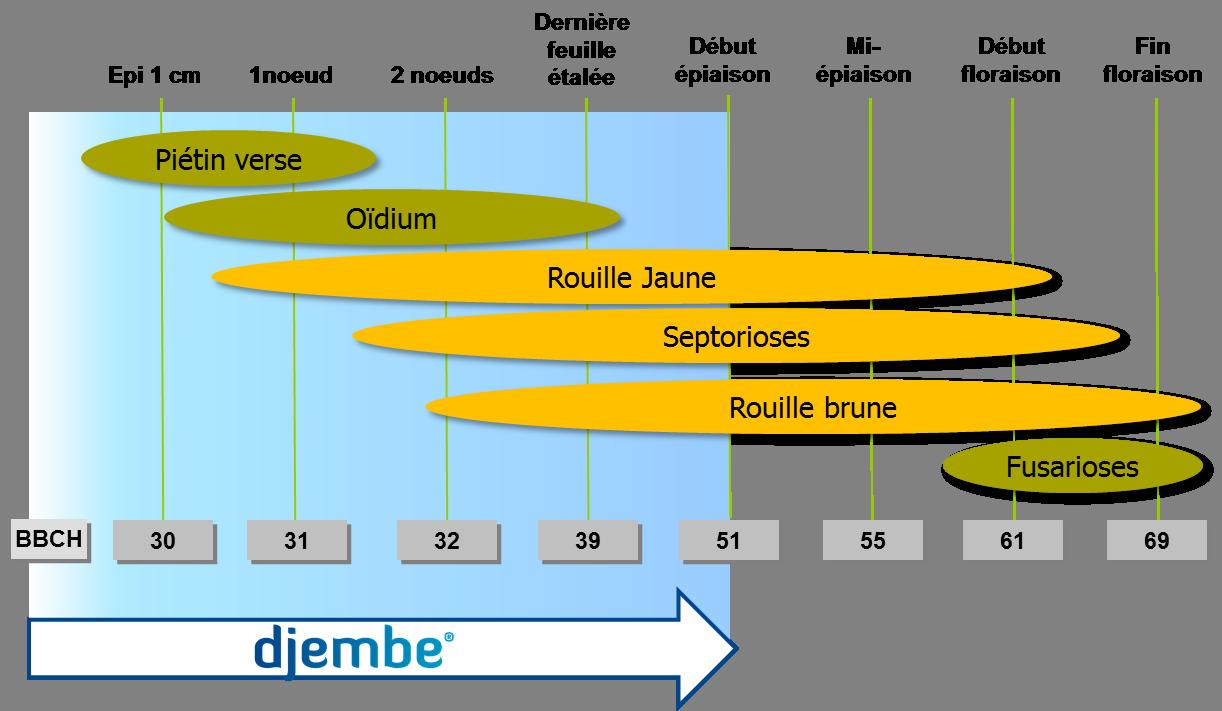 Graphe_Djembe