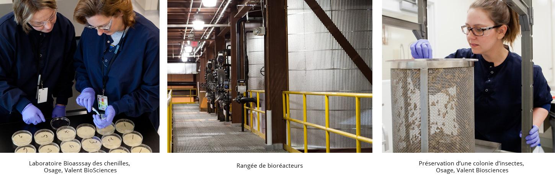 laboratoire_preservation_bioreacteur